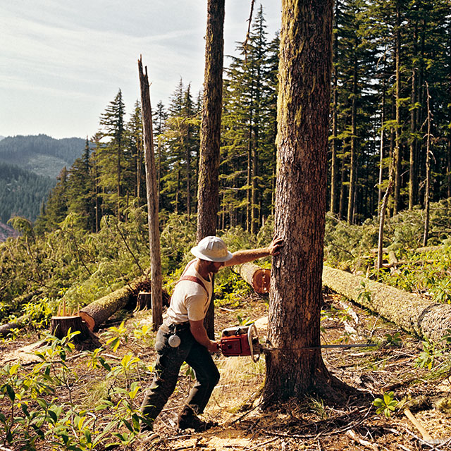 Restrictions on logging in federal forests in the 1990s sent the state's timber industry into a death spiral. (R. LAMB/ClassicStock/The Image Works)