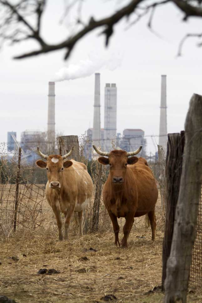 Two of Texas's biggest industries: red meat and power production. (F. CARTER SMITH/BLOOMBERG/GETTY IMAGES)